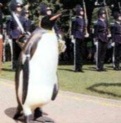 De pingüinos y calores
