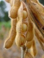 Soja y otros cultivos